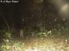 leopard passes the S600 after rain