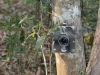 Busted DSLR Canon 350D camera trap set-up