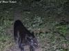 Black leopard Canon 400D