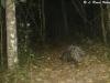 Porcupines in Huai Kha Khaeng
