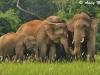 Elephants in Khao Yai NP