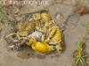 Tree frogs mating in Huai Kha Khaeng