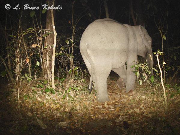 tusker-elephant3
