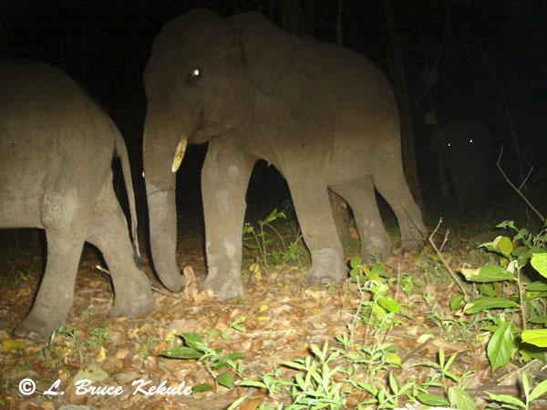Tusker in Safapha