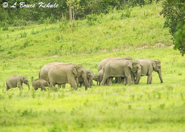 Elephants in Kui Buri NP