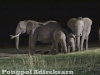 African elephants at Sweetwaters, Kenya