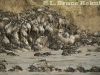 Wildebeest and zebras at a crossing by the Mara River