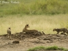 Cheetha family in Amboseli NP