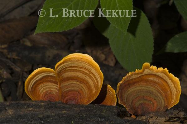 Fungi in Phu Khieo Wildlife Sanctuary