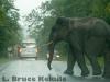 Bull elephant on the road in Khao Yai