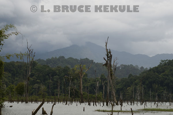 Khlong-Saeng-flooded-forest