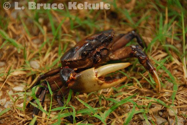 wildlife in Khao Ang Rue Nai