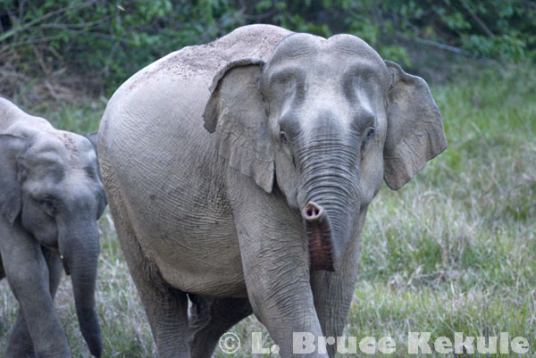 Mother elephant and infant in Khao Ang Rue Nai