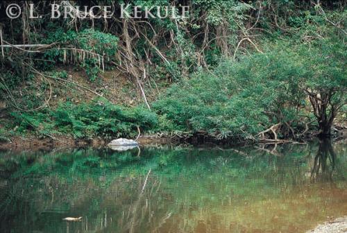 Croc pond - Phetchaburi River