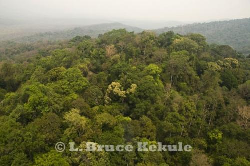 Hill evergreen forest