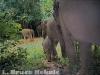 Wild elephant family unit in Kaeng Krachan