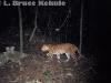 leopard camera trapped in Kaeng Krachan