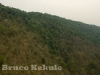 mixed-deciduous-hill-evergreen-forest