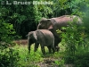 Mother and baby elephant in Kaeng Krachan