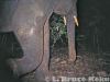 Tusker camera trapped in Kaeng Krachan