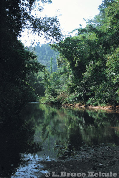 Indochinses tiger habitat in Kaeng Krachan