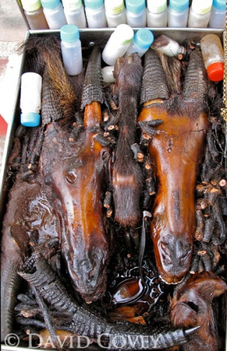Serow heads in oil