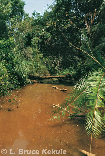 Crocodile pond in Khao Ang Rue Nai