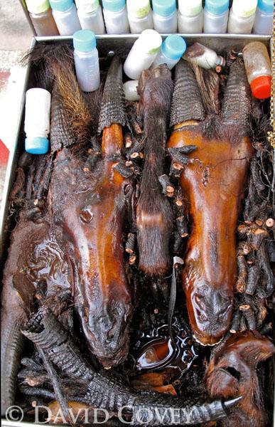 Serow heads in oil